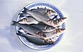 Fresh grouper on plate