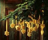 Adventskalender: Plätzchen mit Goldbändchen auf Tannenzweig