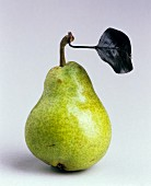 A green Williams pear with stalk and leaf