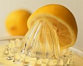 Lemon half on a lemon squeezer