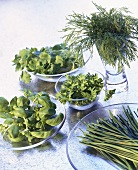 Various herbs on glass plates and in glass bowls