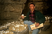 Cultivating mushroom in a cellar