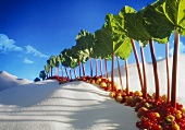 Avenue of rhubarb sticks and fruit in a sugar desert