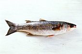 Grey mullet on a white wooden background