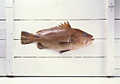 Grouper on white wooden background