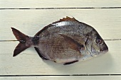 White bream on a white wooden background