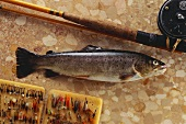 Brook trout on brown marble with fishing tackle