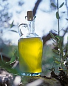 A carafe of olive oil on an olive tree