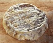 Saint-Felicien, a French soft cheese