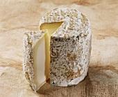 Chabichou, a French goat's cheese