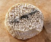 Le Provencal, a French goat's cheese, on brown background