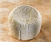 Brocciu, a Corsican goat or sheep's cheese