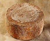Ossau-Iraty, a sheep's cheese, on reddish background