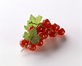 Red Currants with Leaves