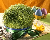 Home-grown cress in a dish for Easter