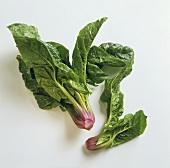 Spinat auf weißem Untergrund