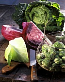 Still life with various types of cabbage