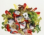 Herring salad with gherkins and pepper