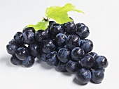 Black grapes with drops of water