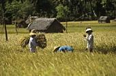 Arbeiter auf einem Reisfeld in Bali