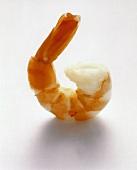 A Single Shrimp