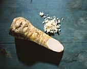 Horseradish on a blue background