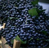 Black grapes in a crate