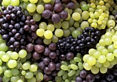 Various Green and Red Grapes