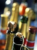 Necks of various sparkling wine bottles