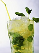 Mojito cocktail with ice cubes and herb sprigs