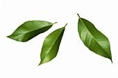Three fresh bay leaves