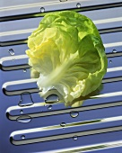 A lettuce leaf on a stainless background with drops of water