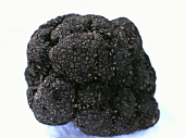 Fine black truffle on a white background