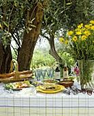 Mediterranean buffet under olive tree