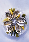 Six opened oysters with ice, lemon, seaweed on plate
