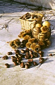 Sweet chestnuts in front of two baskets in the open air