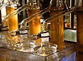 Laboratory set-up for fatty acid determination in beer