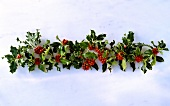 Garland of holly on white background