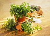 Fresh herbs in pots, roast lamb in salt dough behind