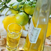 Limoncello (home-made lemon liqueur), Campania, Italy