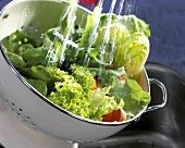 Washing Fresh Lettuce in Strainer