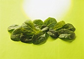 Fresh spinach leaves on pale-green background