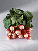A bunch of radishes on a light background