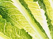 Romaine lettuce leaves