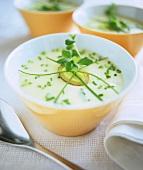 Cream of potato soup with fresh herbs