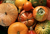 Many different types of squash (filling the picture)