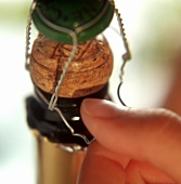 Opening sparkling wine bottle: lifting off wire basket