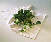Sorrel on white linen cloth