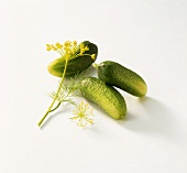 Three raw pickling cucumbers with dill
