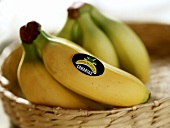 Two bunches of bananas from the Canary Islands in basket